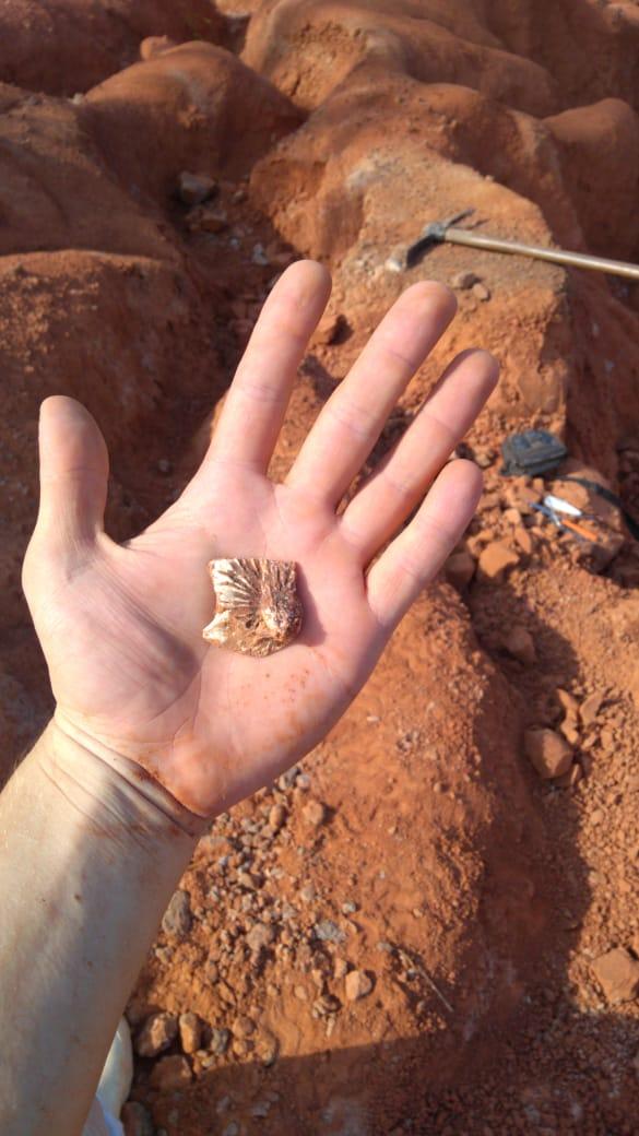 Foto vertical colorida com uma mão aberta e dentro um pedaço do fóssil, ao fundo um terreno escavado