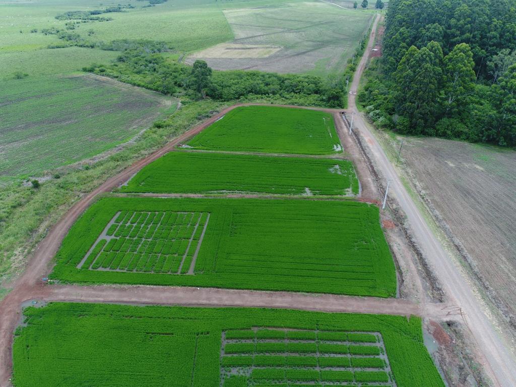 Foto colorida mostra visão aérea, há uma área verde cultivada cortada por estradas, uma mata mais ao fundo e áreas com outros cultivos ao lado e atrás