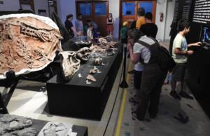 Mostra Paleontológica (CAPPA)