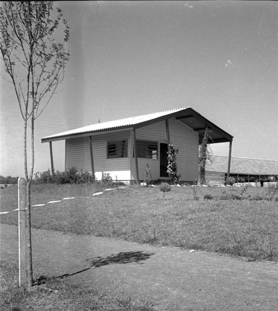 Fotografia em preto e branco, em dia ensolarado, de uma casa avarandada no alto de terreno gramado, próxima a uma estrada de terra. A casa é de madeira, na cor branca, onde se vê a lateral esquerda e a fachada. Sete escoras de madeira escura sustentam o avanço do telhado de fibrocimento e trepadeiras envolvem as duas escoras centrais. No canto da casa, duas janelas basculantes quase juntas, uma em cada parede. Na fachada, ao lado da janela, uma porta aberta. À direita, ao fundo, um grande telhado de barro sustentado por pilares cobrem embalagens altas e claras. Na lateral esquerda da foto, uma muda de árvore com tronco fino, que se divide em dois galhos que formam uma copa com poucas folhas. Atrás do tronco, cravada no gramado, uma estaca de madeira arredondada na parte superior. À direita, a estrada em diagonal descendente, na qual a sombra da árvore se estende de um lado a outro. Na subida da estrada até a casa, um caminho com degraus brancos sobre o gramado.