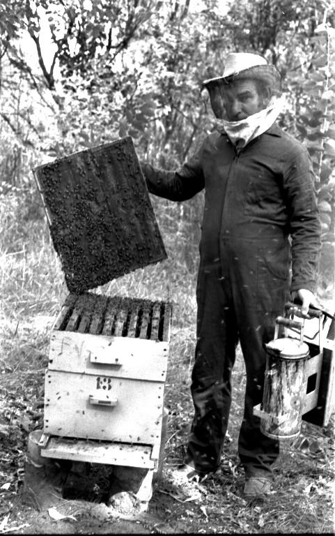 Fotografia vertical em preto e branco de um homem, de corpo inteiro, segurando um fumigador e a tampa de uma caixa de abelhas, em um campo com arbustos ao fundo. O homem, à direita, está de perfil esquerdo, tem cabelo curto, claro e liso e um chapéu de palha de abas largas sobre a cabeça. Encobrindo o chapéu e o rosto, uma proteção de tecido transparente, que na altura do pescoço é claro e grosso. O homem veste um macacão escuro de manga longa e calçados fechados e escuros. Na mão esquerda segura, pela alça, um fumigador, de metal, e na mão direita, a tampa de uma caixa, de madeira, commuitas abelhas pousadas. A caixa, à esquerda da foto e abaixo da tampa, é constituída por dois compartimentos sobrepostos com puxadores na parte frontal, e está apoiada em duas latas pequenas de metal. O compartimento de cima é uma melgueira. No compartimento de baixo está uma colméia e tem escrito o número treze. O chão é coberto de grama e, ao fundo, arbustos pequenos, escuros e ralos.