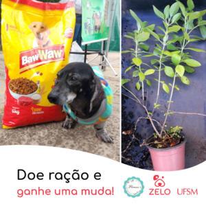 Projeto Zelo e Floresce
