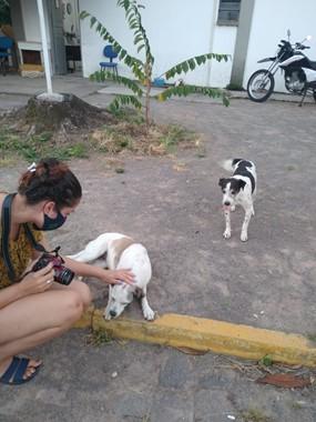 Cães recebem carinho no campus da UFSM