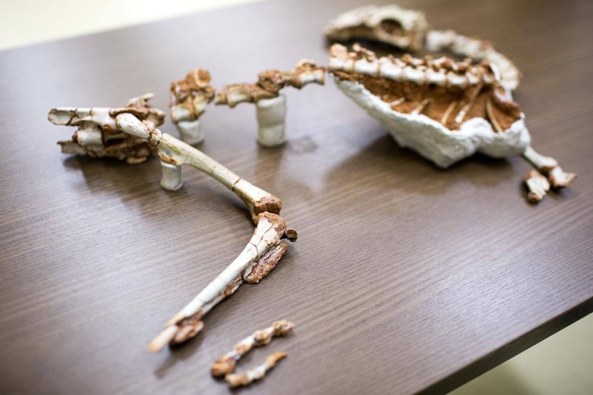 Fóssil raro de dinossauro do período Triássico é encontrado