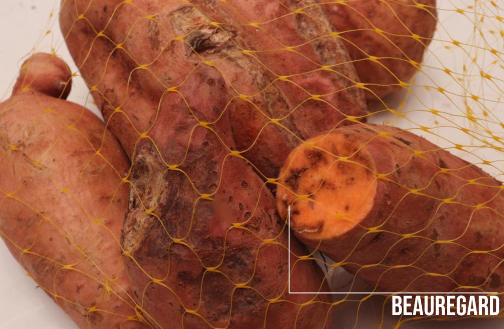 """Fotografia colorida na horizontal. Nela, um registro aproximado da batata-doce sinalizada pela legenda como """"Beauregard"""". O tom dela é alaranjado por dentro e por fora."""
