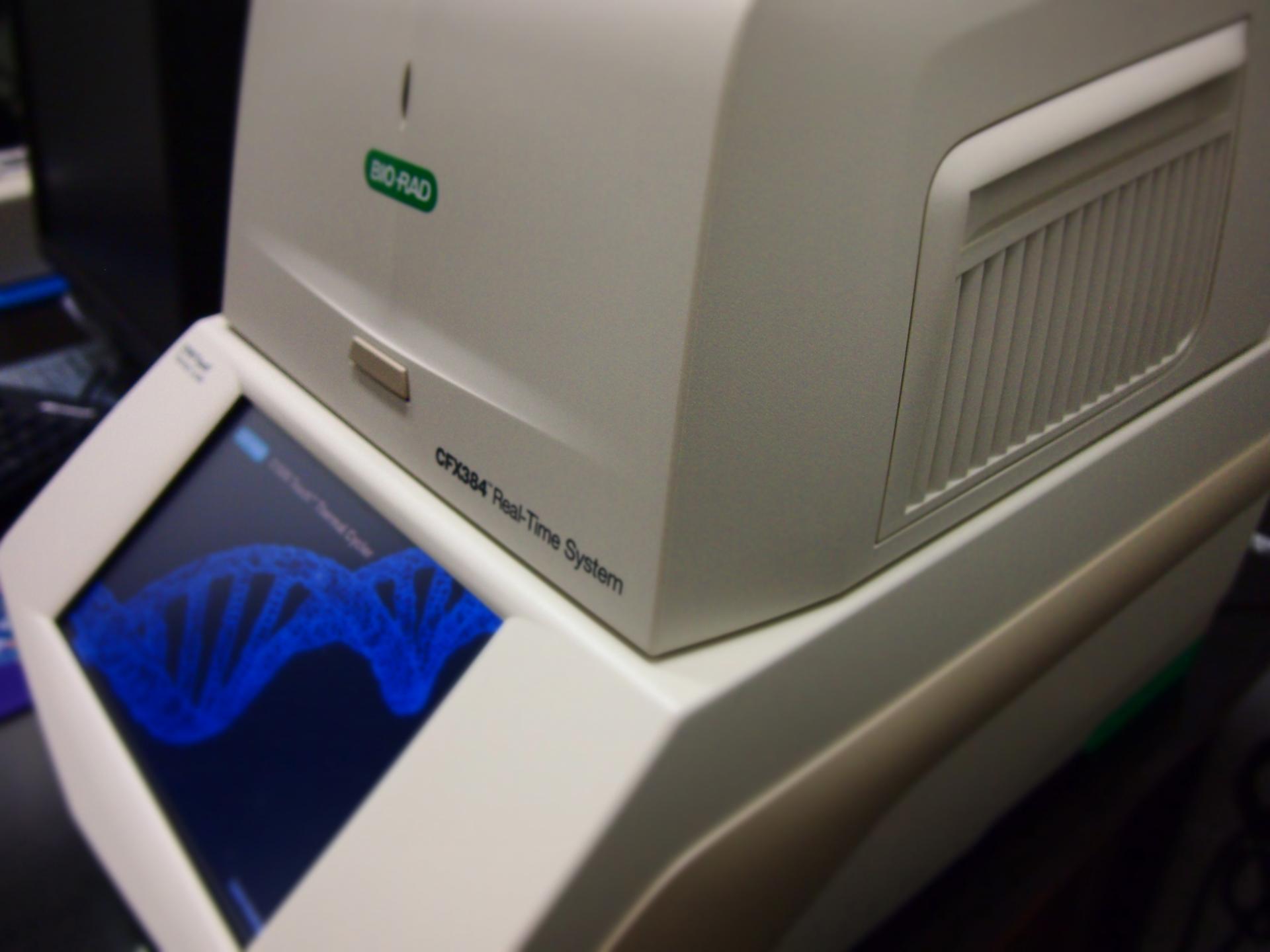 PCR REAL TIME BIORAD CFX384