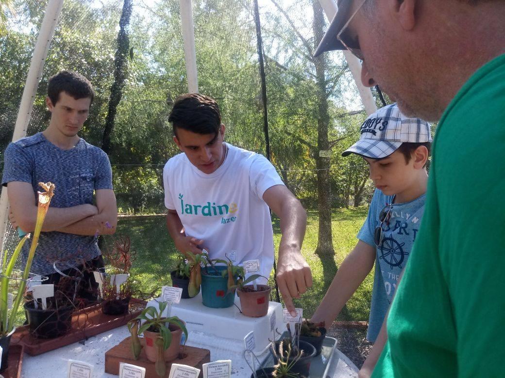 Quatro pessoas em torno de uma mesa manipulando plantas